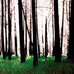 Inside The Trees cover art